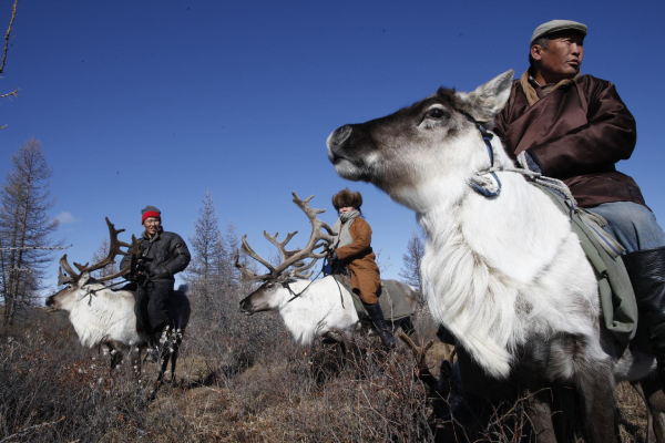 Vaccine delivery by reindeer